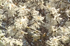 Spring Flowers 04 Stock Footage
