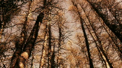 Panshot of tree crowns covering 360 degrees Stock Footage