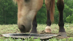 Horses eating  Stock Footage