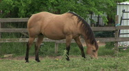 Stock Video Footage of horses 5