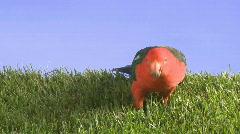 Bird in grass Stock Footage