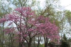 Spring Flowers 15 Stock Footage