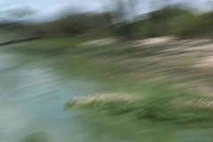 Croc in green water - stock footage