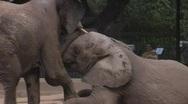 Elephants playing Stock Footage