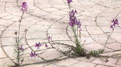 Wildflowers walkway crack Stock Footage