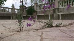 Wildflowers walkway crack 2 Stock Footage