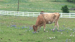 Cow pasture 5 Stock Footage
