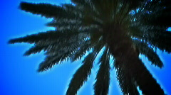 Palms birght graphic Stock Footage