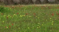 Hay bales wildflowers Stock Footage