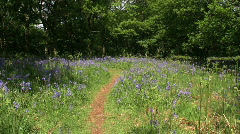 Path through a woodland clearing with bluebells Stock Footage