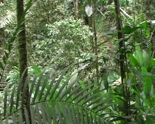 Tree fern in cloudforest Stock Footage