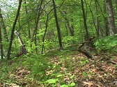 Forest 04 Stock Footage