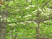 Forest 01 Stock Footage