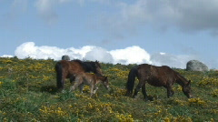 Horses in the mountain Stock Footage