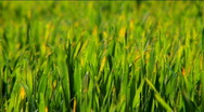 Green Green Grass Stock Footage