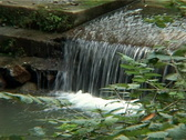 Stock Video Footage of Water Stream