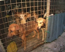 Shelter Dogs Stock Footage