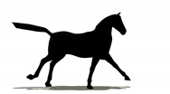 Stock Video Footage of Horse silhouette