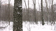 Stock Video Footage of winter park panorama
