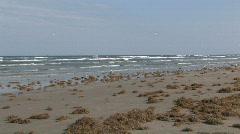 Beach Padre Island seaweed birds M HD Stock Footage