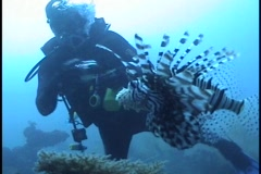 Diver taking picture of a fish Underwater - stock footage