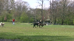 Dogs playing in a park Stock Footage