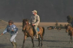 Tourists with masks on horses Stock Footage