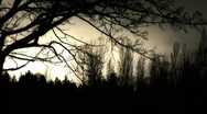 Bare trees silhouette Stock Footage