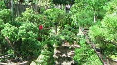 assorted bonsei trees. - stock footage