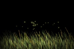 Moonlight on grass with fireflies - digital animation - stock footage