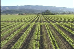 Napa Valley Vineyard Aerial (Wide) - stock footage