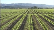 Stock Video Footage of Napa Valley Vineyard Aerial (Wide)