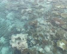 Maldivian corals Stock Footage