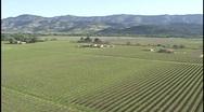 Vineyard Aerial Wide Stock Footage
