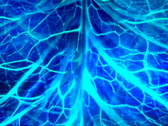 VJ Loop 013 : Nerve System Blue Stock Footage