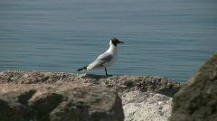 Sea gul Stock Footage