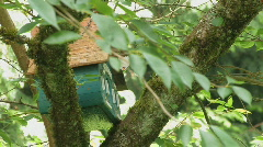 Nesting box Stock Footage