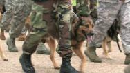 Military police dogs marching in formation M HD Stock Footage