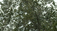 Stock Video Footage of Snowing in trees 1