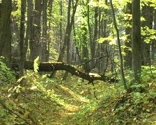 Leaf fall Stock Footage