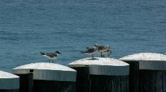 Birds on pylons in the Florida Keys - stock footage