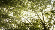 Stock Video Footage of Trees
