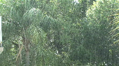 Tropical Down Pour Stock Footage