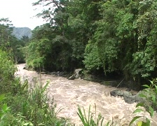 Rio Toachi, Ecuador in flood Stock Footage
