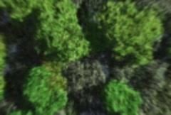 Georgia in Trees Stock Footage
