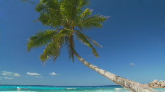 Palmtree in paradise na Stock Footage
