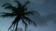 Tropical 59 - HD Stock Footage