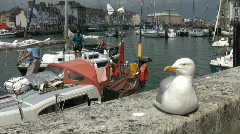 Seagull on the sea wall with boats in the harbour at Weymouth Dorset England Stock Footage