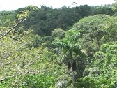 View over the rainforest canopy Stock Footage