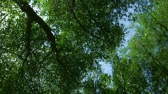 Windy Trees 14 - HD Stock Footage